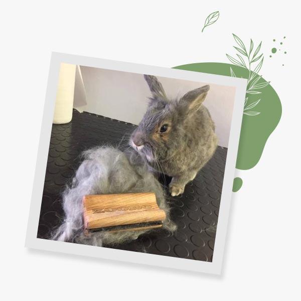 zooro-grooming-bunny-reviews