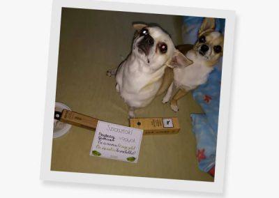 zooro-toothbrush-dogs