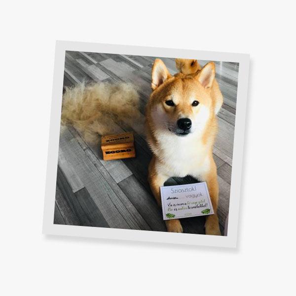 toothbrushing-zooro-dog