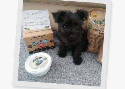 puppy-zooro-poop-bag